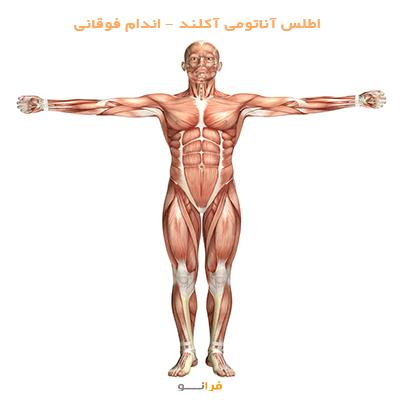 اطلس آناتومی آکلند – اندام فوقانی