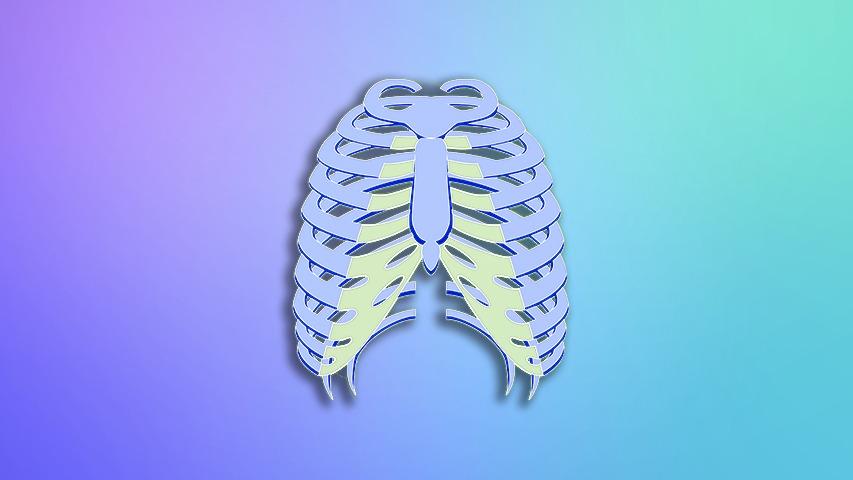 اطلس آناتومی آکلند(تنه)